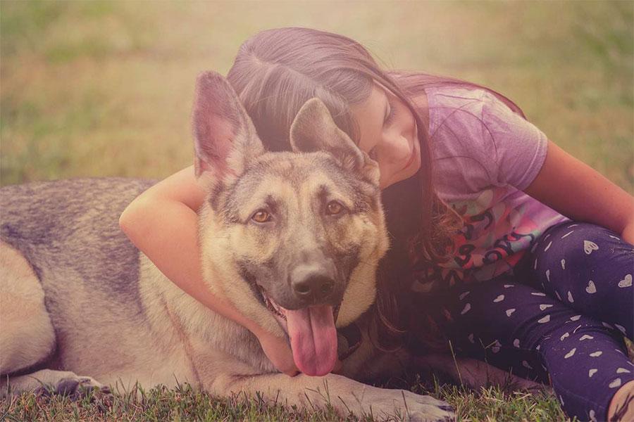 djevojcica grli psa njemackog ovcara dok sjedi na travi