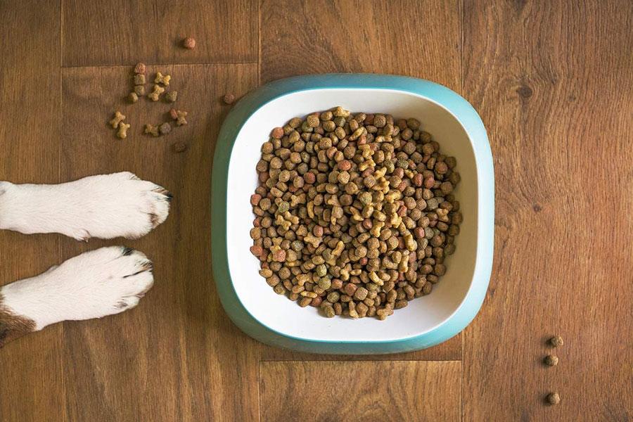 dvije šape od psa pored posude sa hranom
