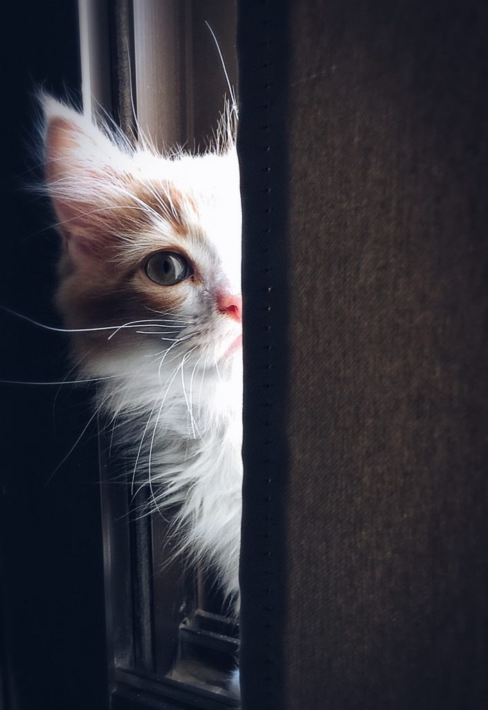 Maca viri iza vrata