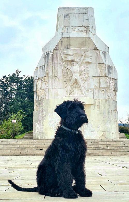 Crni pas sjedi ispred spomenika na Banj brdu