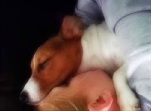 mali pas smeđe glave i djecak zagrčljeni slavaju