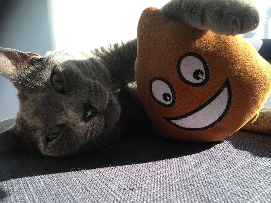 Tanja Stupar Trifunović - siva mačka leži na krevetu i grli igračku