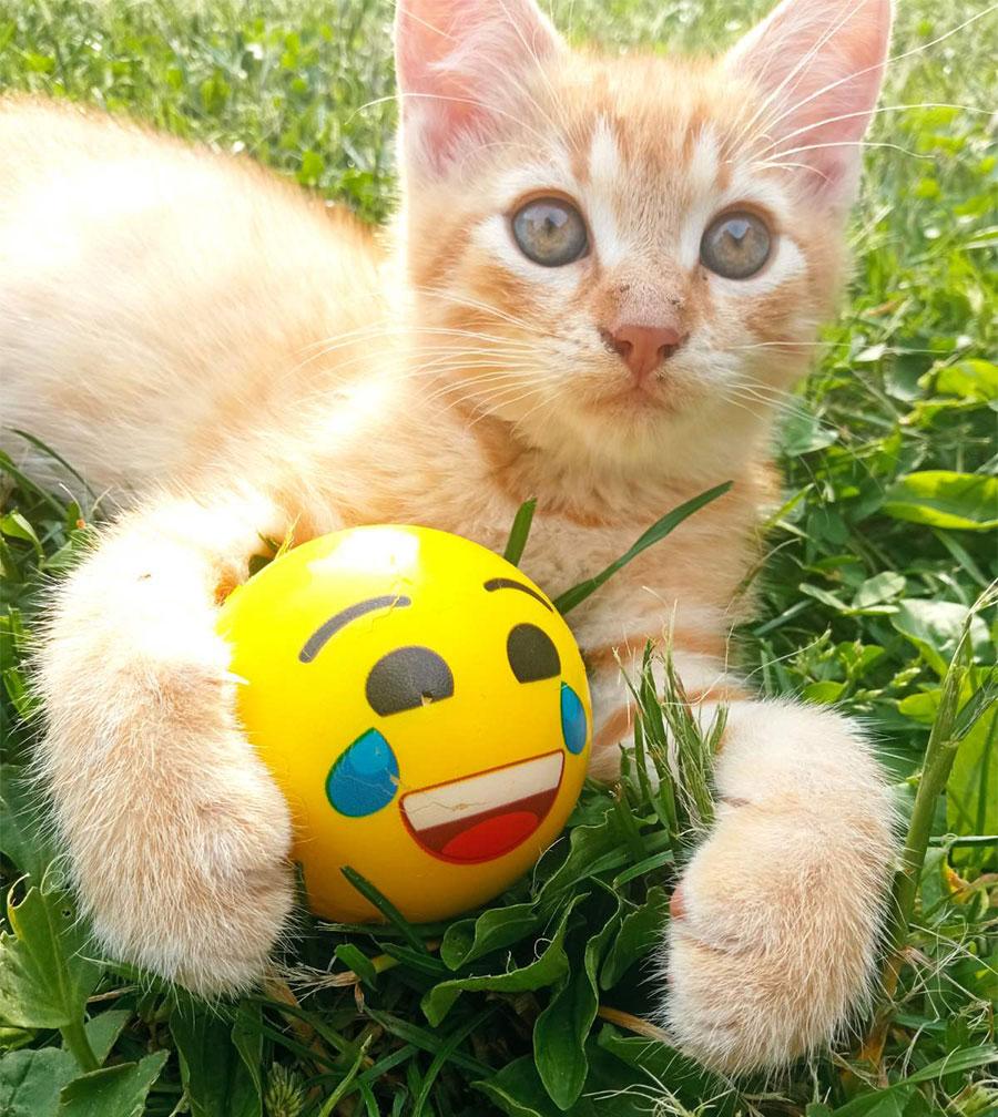 žuta mačka leži na travi i grli žutu loptu