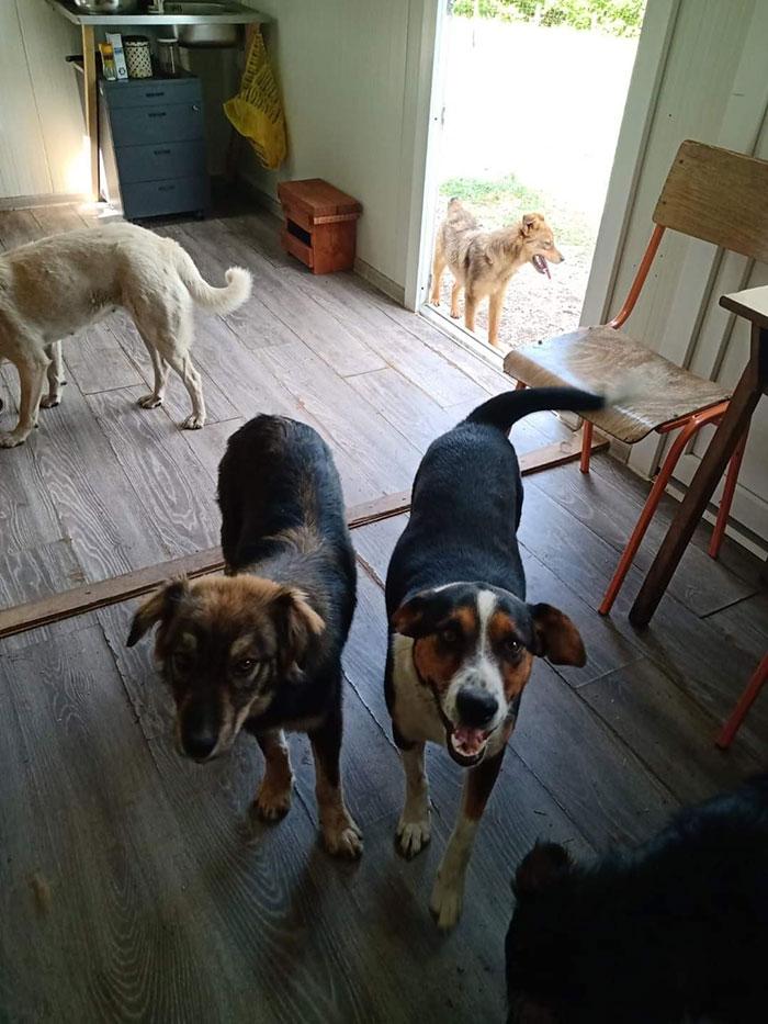 tri psa u kući