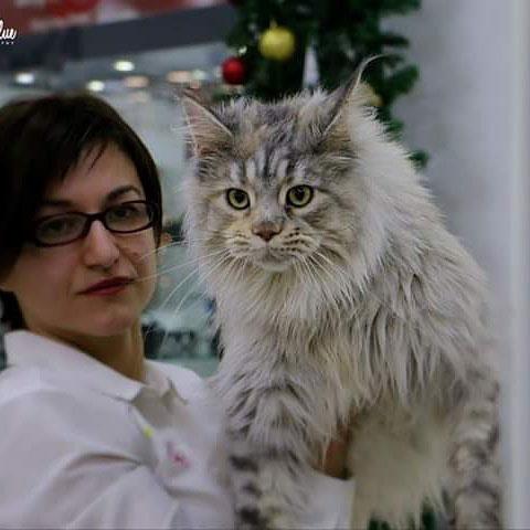 žena drži mačku