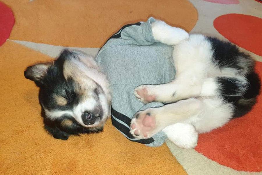 mali pas u duksu spava