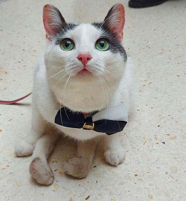 Crno bijela mačka Verdi